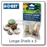 Hobby Large Snail Shells (Pack of 5)